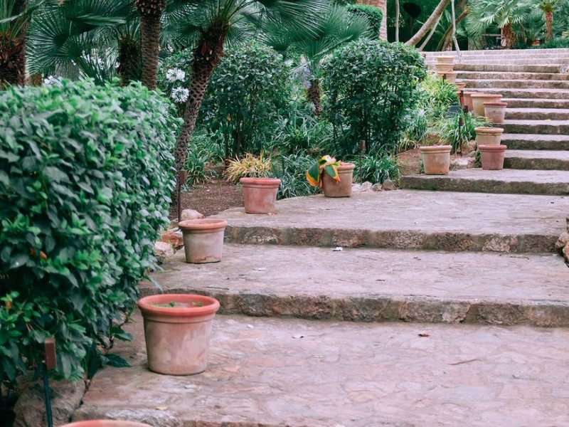 stone stairs amidst exotic trees in lush garden